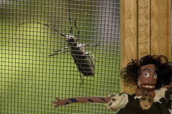 Oola and a bug