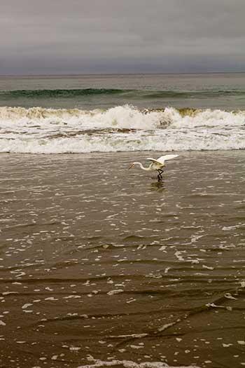 Morro bay surf
