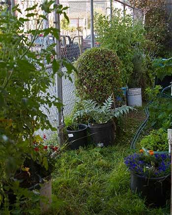 Oola's garden