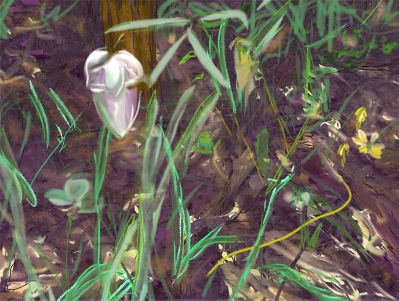 drawing of white flower in forest