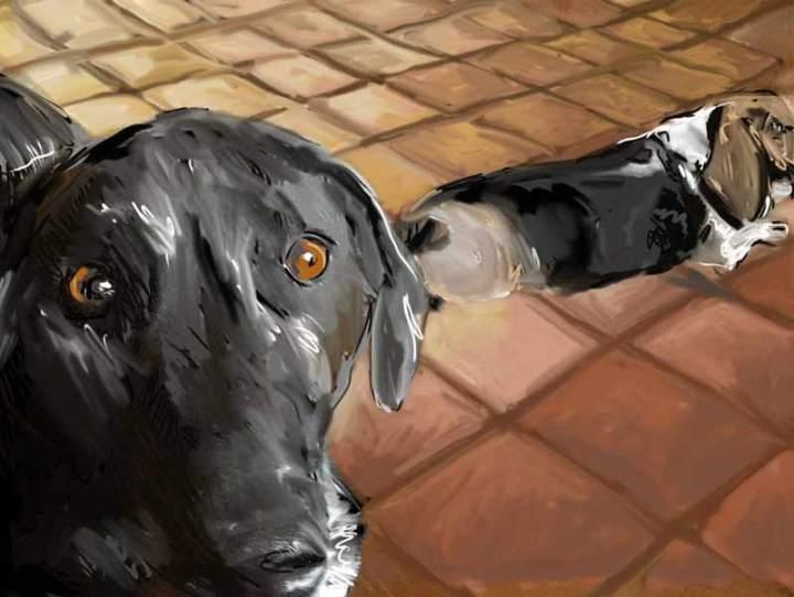 Lana's dogs