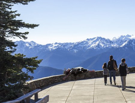 Oola sunning on Hurricane Ridge