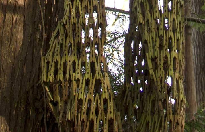 detail in Webster's Woods
