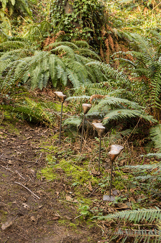 Webster's Woods