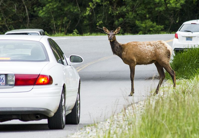 elk-car