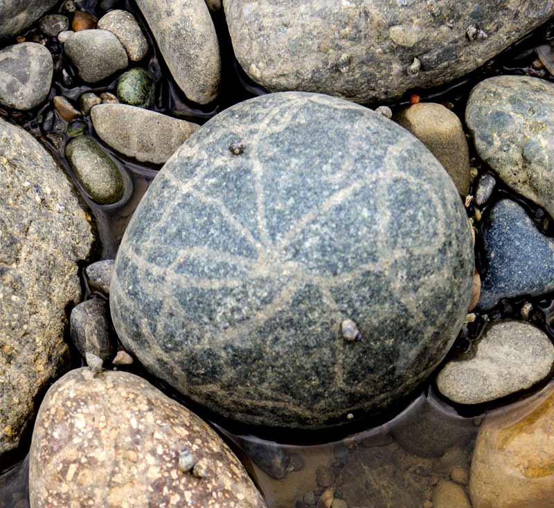 snail trails on stones
