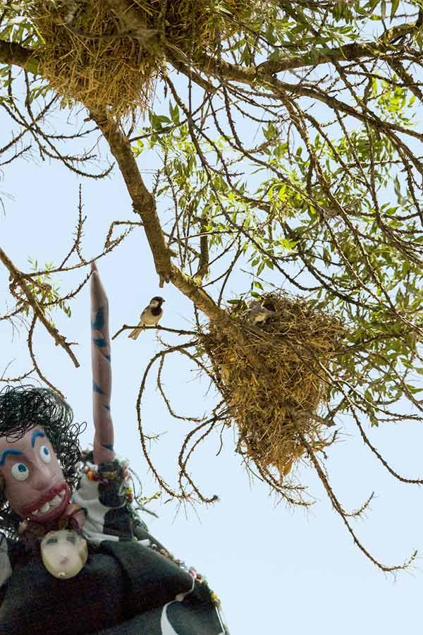 Oola and birds